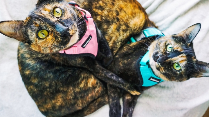 From Feral to Flying: Airplane Travel withCats